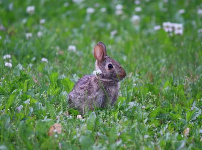 Baby bunny sitting in the grass.