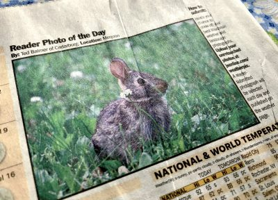 The newspaper article with the picture of my bunny.
